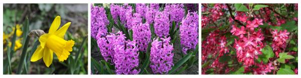 scent sciences - flowers - blog